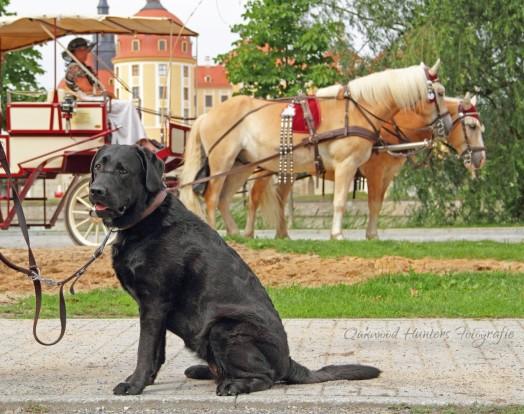 IMG_8521c_Easy Pferde3__1600